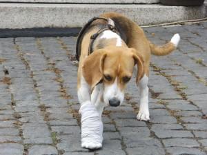 Krallenverletzung
