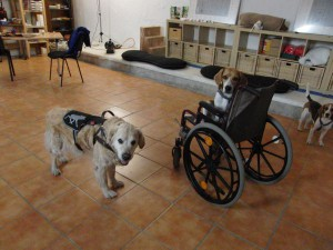 Rollstuhluebergabe 3