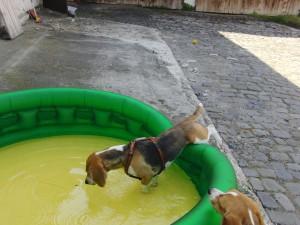Wassergewoehnung 1