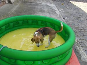 Wassergewoehnung 2